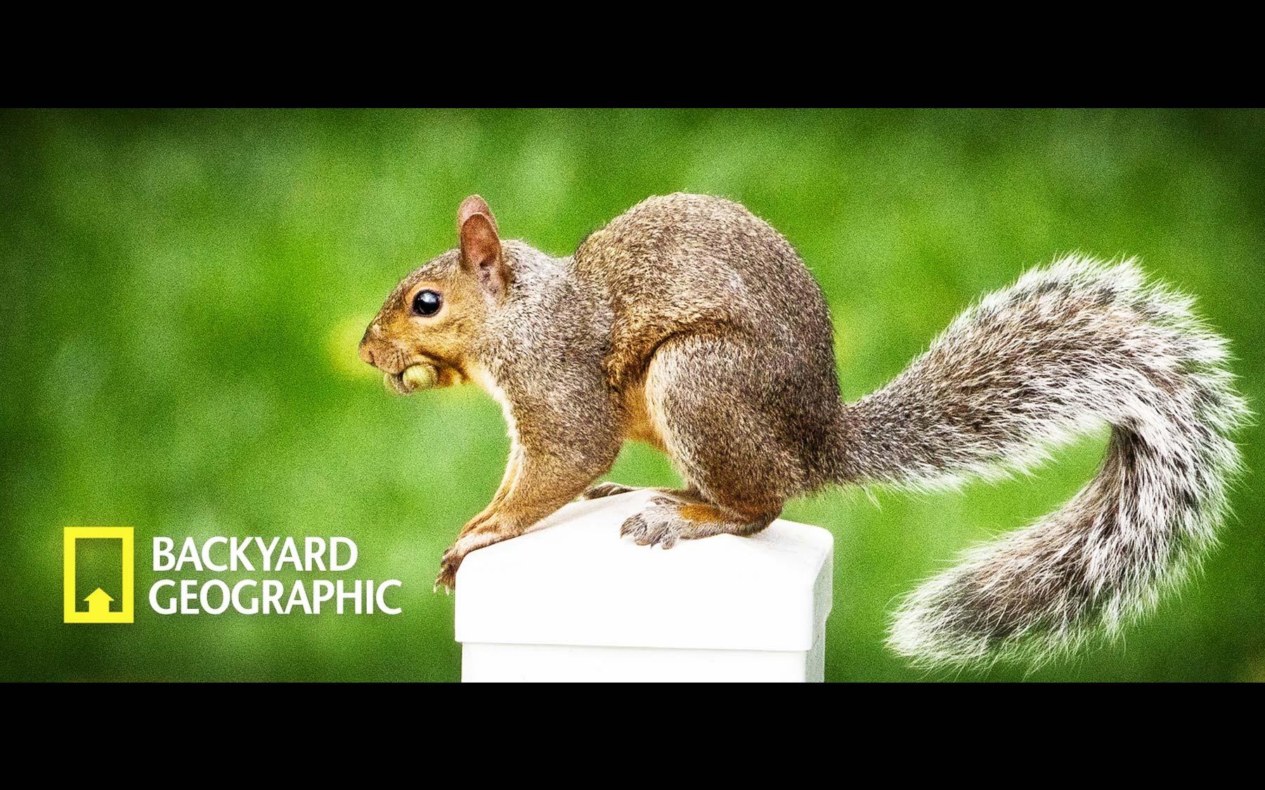 01-BYG-squirrel-perch