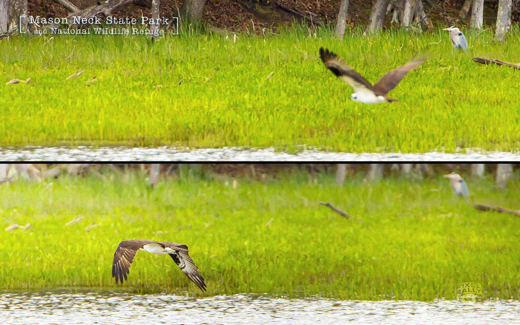 BYP-Hudson-hike-Osprey-Heron-combo