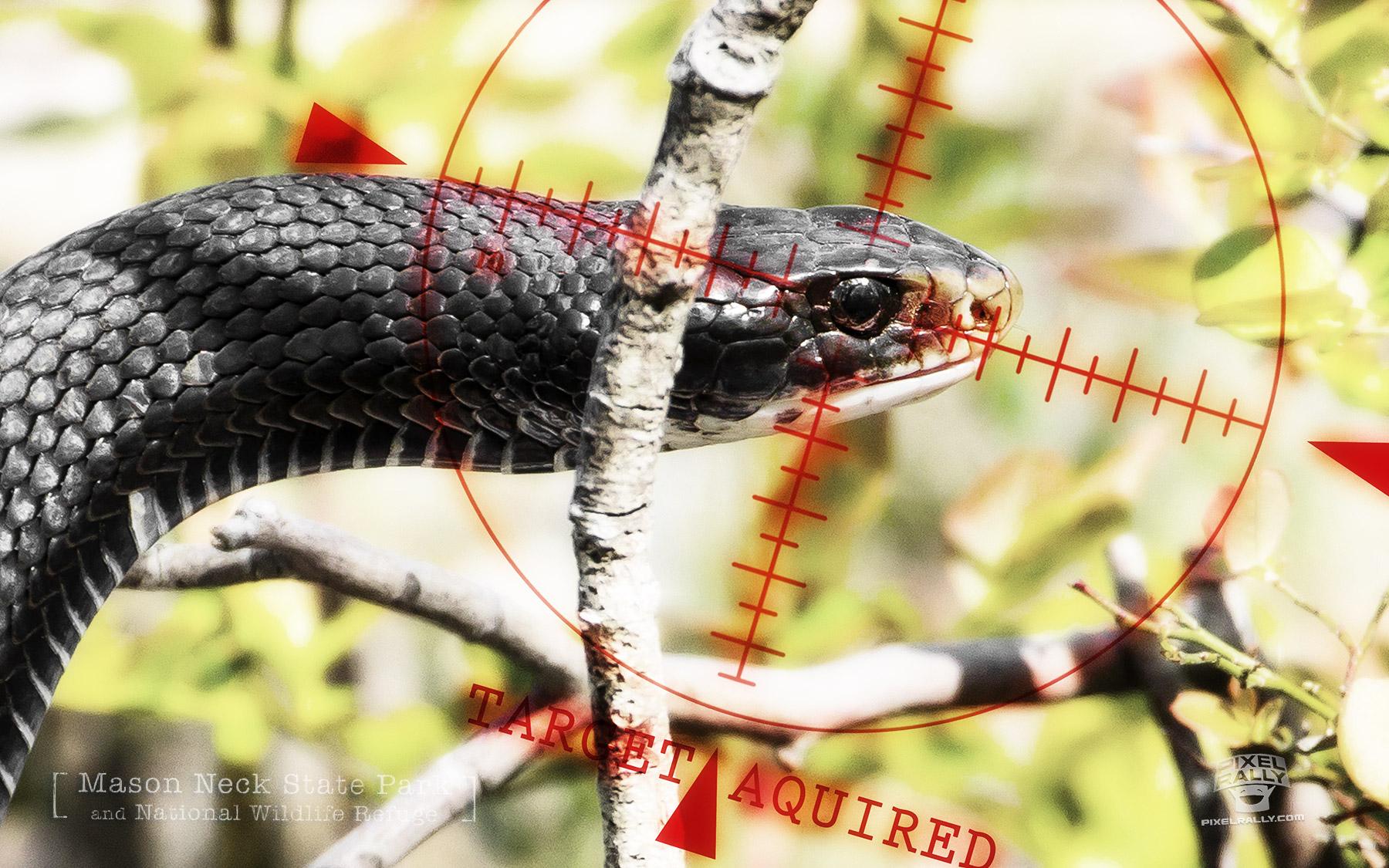 Osprey-Snake-target