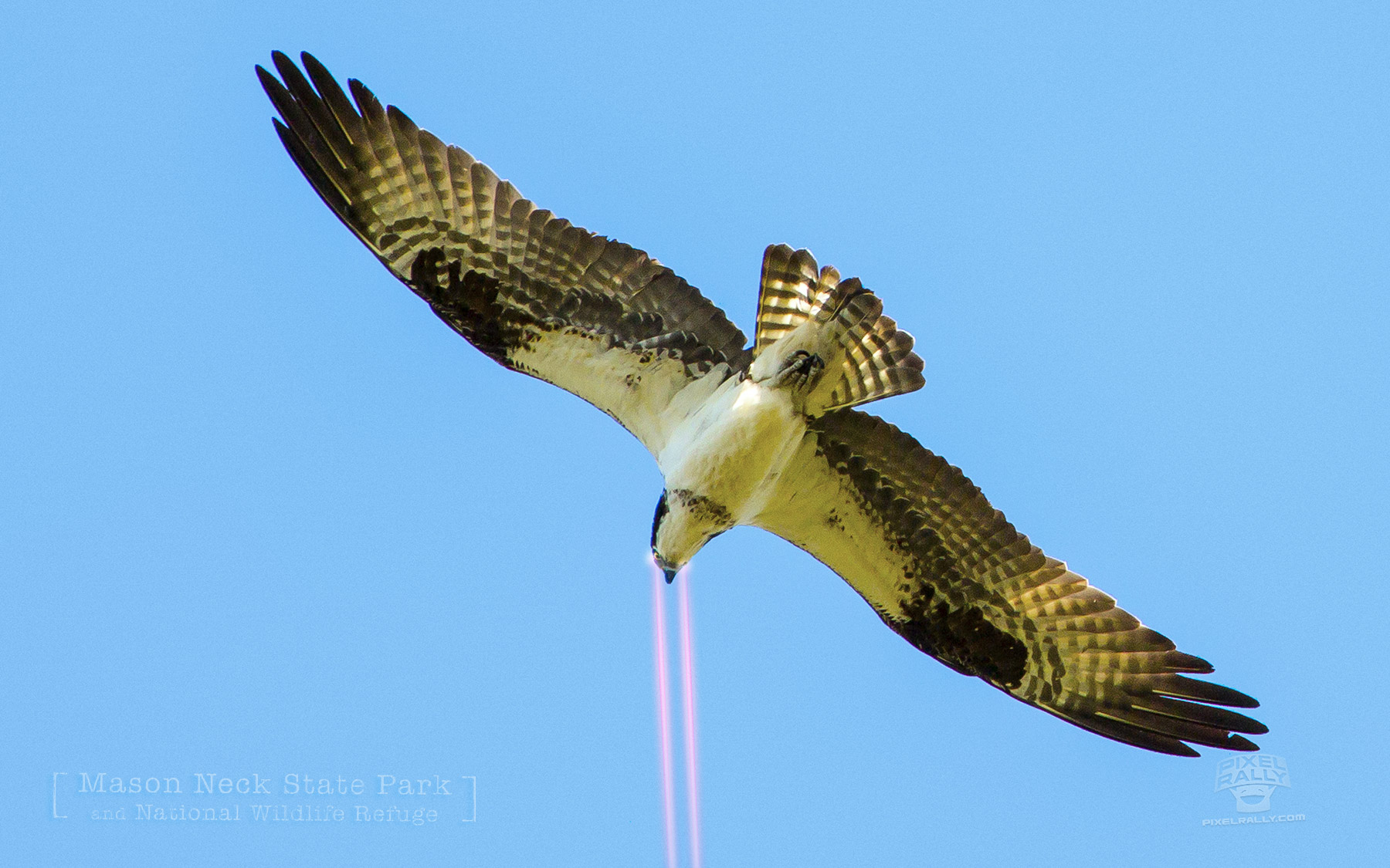 Osprey-laser-sight