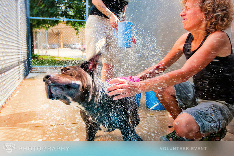 Photography-CACC-dogwash
