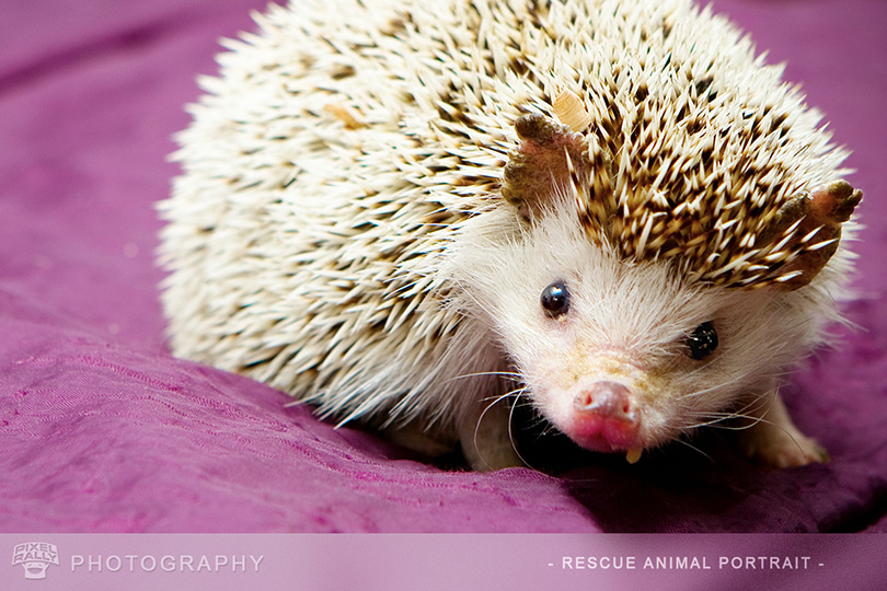 Photography-HedgeHog