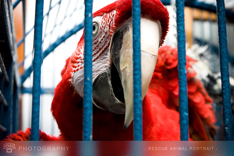 Photography-MacawCage1