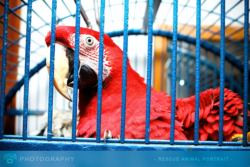 Photography-MacawCage2