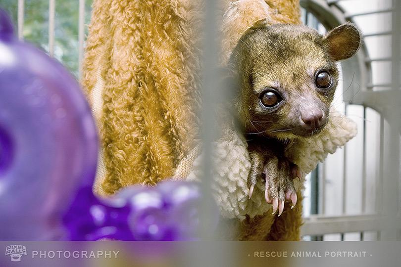 Photography-Marsupial