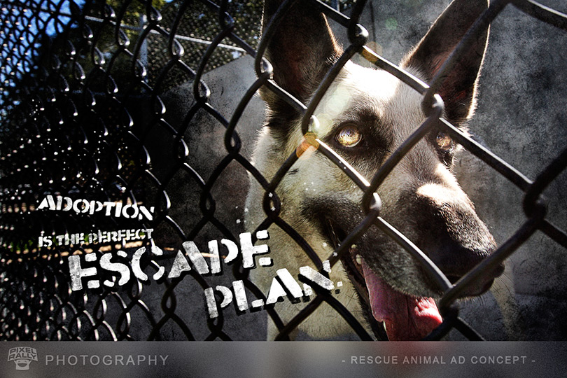 Photography-Rescue-Escape