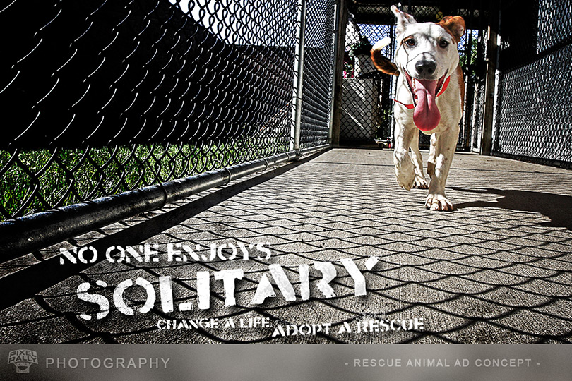 Photography-Rescue-Solitary