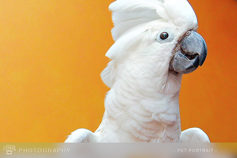 Photography-Squawky