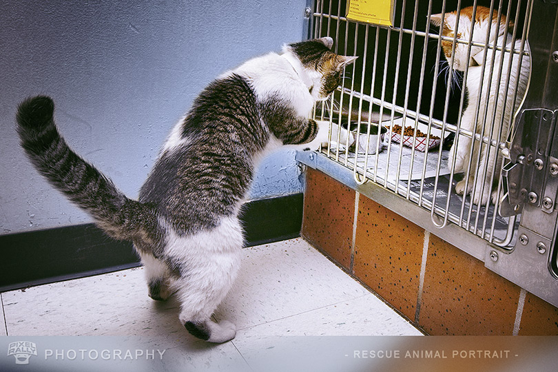 Photography-cat-thief