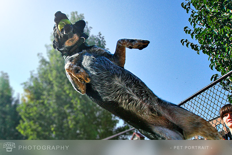 Photography-leaping-dog