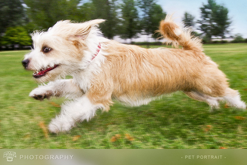 Photography-running-dog