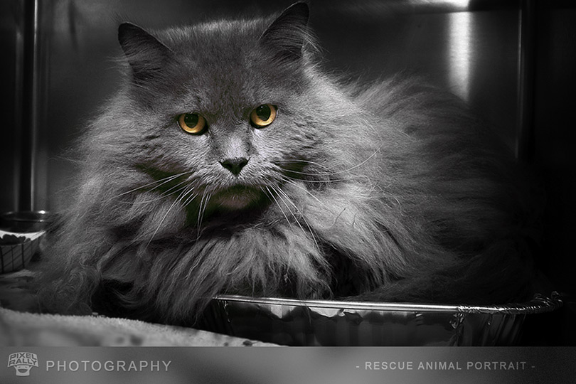 Photography-stinky-cat
