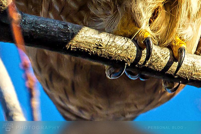 byp-hawk-talons