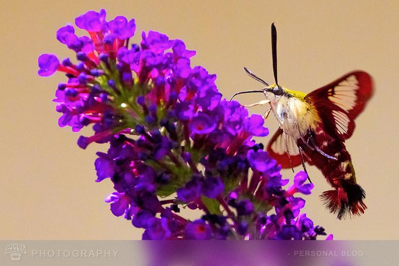 byp-hummingbird-butterfly