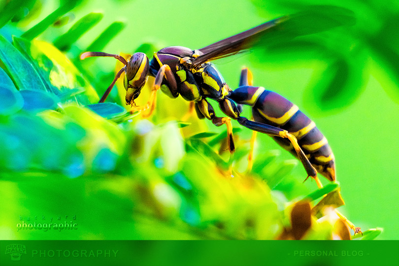 byp-wasp-fern