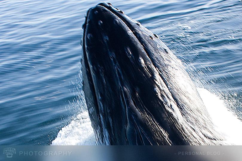 byp-whale-breech