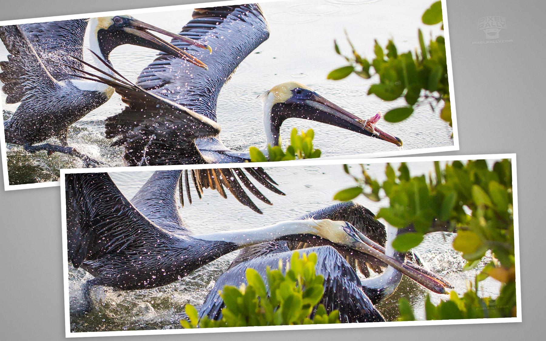 pelican-bite-combo