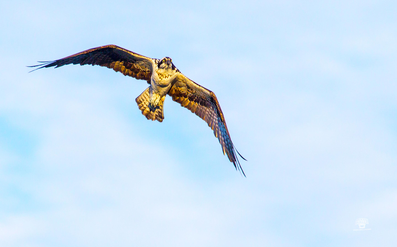 pixelrally-floridavacation-ospreyflight